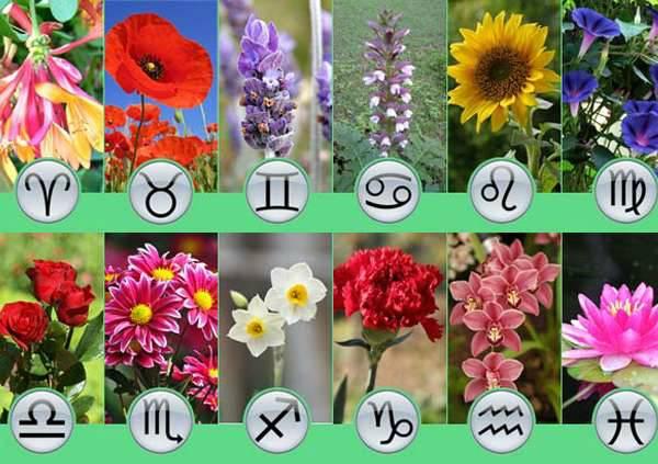 Фото знаков зодиака из цветов